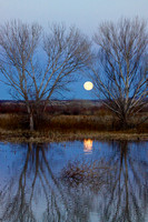 Bosque Del Apache Moonrise