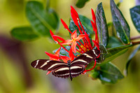 Butterfly on red_