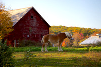 Horse with Red Barn