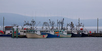Scallop Boats Digby
