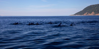 Here Come the Pilot Whales